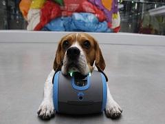 Laika, un robot qui permet une interaction entre les chiens et leurs maitres