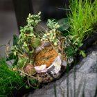 Moser Nature Watch : une montre végétale créée par H. Moser & Cie.