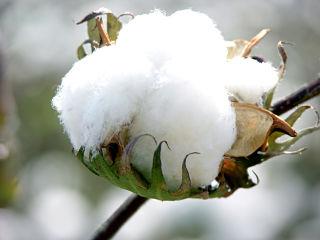 Gap, usage du coton durable pour le pret a porter pour la protection de l environnement et ressources naturelles