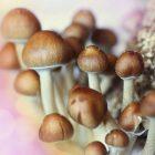 Les champignons pourraient prévenir le cancer de la prostate