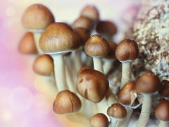 Cancer de la prostate et champignons, consommation de cet aliment pour la sante