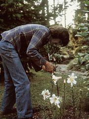 George Harrison, parc arbore a l honneur du musicien des Beatles a Liverpool