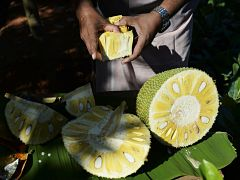 Jaque, un fruit issu de l Inde riche en antioxydants et en vitamines