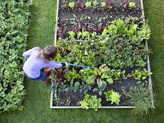 Jardinage en confinement, creation d un potager et activites au jardin