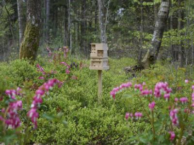 Bee Home, une maison pour abeilles à construire vous-même