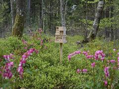 Bee Home, maison pour abeilles d Ikea pour renouer avec l environnement