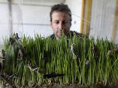 Sauterelles et proteines, consommation d insectes pour relever le defi alimentaire