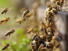 Abeilles, ces insectes pollinisateurs sont cruciaux pour l ecosysteme
