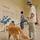 Un musée coréen pense aux chiens