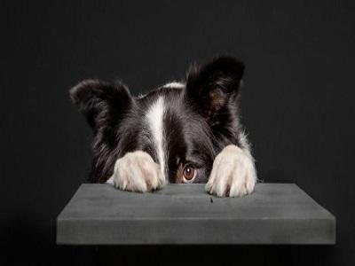Un chien se cache