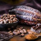 Le cacao rend plus intelligent