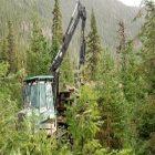 Environnement : des écogestes contre la déforestation
