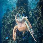 Adoptons les bons gestes pour la protection de l'environnement maritime