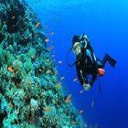 Des règles de sécurité pour faire de la plongée