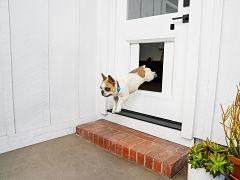 Porte connectee pour chien, myQ Pet Portal au CES 2021