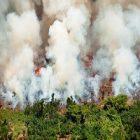 Environnement : des astuces pour lutter contre la déforestation