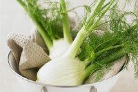 Quels sont les bienfaits du fenouil sur la santé et le corps ?