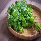 Coriandre : les vertus nutritionnelles de cette plante sur le corps