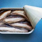 Les nombreuses vertus nutritionnelles de la sardine