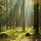Une forêt comestible gérée en permaculture