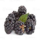 Mûre : un fruit bénéfique pour la santé et le corps