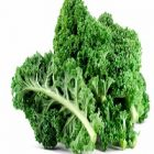 Kale, les vertus exceptionnelles de ce chou !