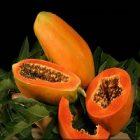 La papaye et ses nombreuses vertus pour le corps