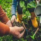 Jardinage : des conseils pour réussir votre potager au printemps