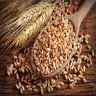 Épeautre, une céréale bénéfique au corps