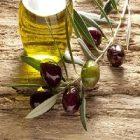 L'huile d'olive, un produit bénéfique au métabolisme !