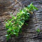 Sarriette : comment cette plante aide-t-elle le métabolisme ?