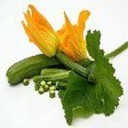 Courgette : un légume efficace pour la peau