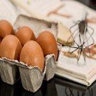 L'œuf, un allié pour la peau et le visage