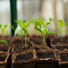 Jardinage : comment faciliter la pousse des fruits et légumes ?