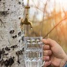 Jus de bouleau : une boisson bénéfique au corps !